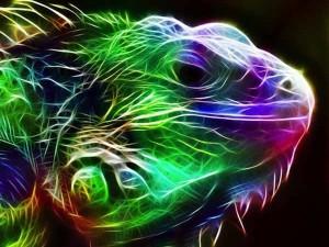 ışıklı hayvan resimleri